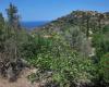 Deia,Mallorca,Plot,1131
